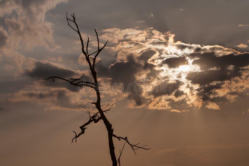 Filiali dell'albero guasto fotografia stock libera da diritti