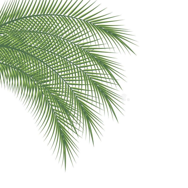 Filiali delle palme royalty illustrazione gratis