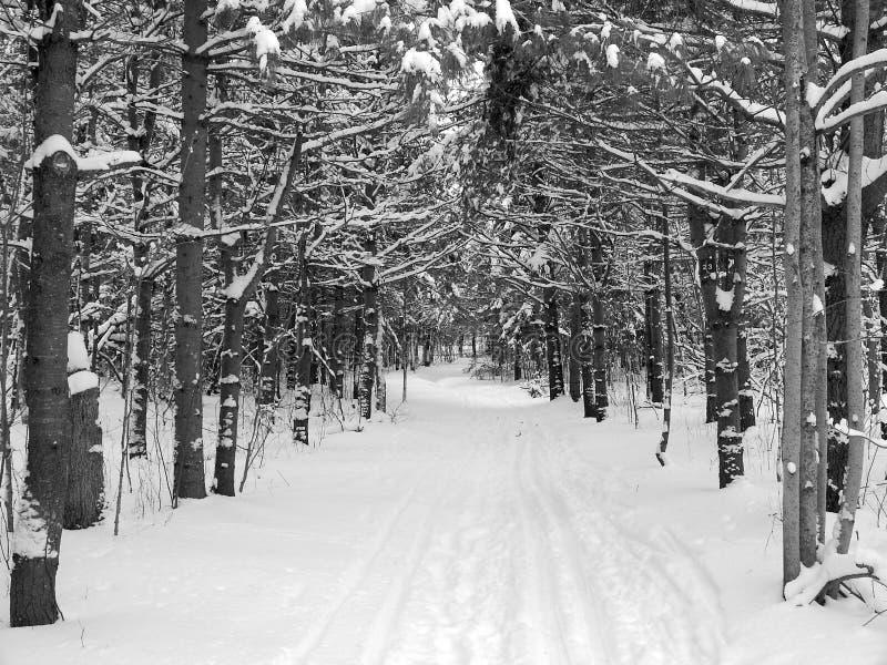 Filiali dello Snowy sopra una traccia del pattino immagine stock