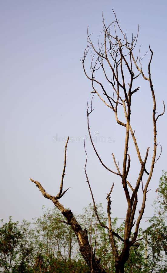 Filiali di albero asciutte fotografie stock