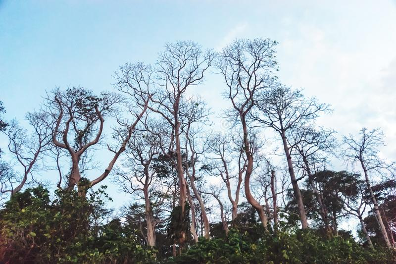 Filiali di albero asciutte fotografia stock libera da diritti