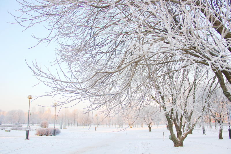 Filiali di albero coperte di gelo bianco fotografia stock libera da diritti