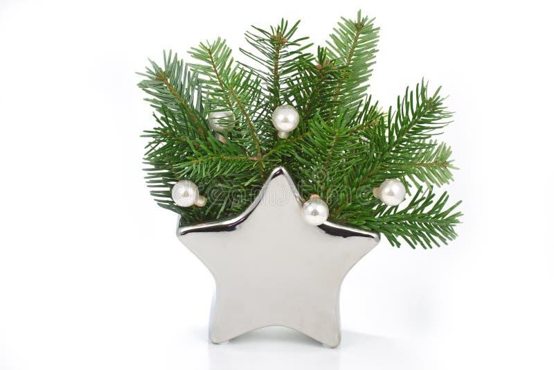 Filiali di albero del pino in un vaso a forma di stella immagine stock