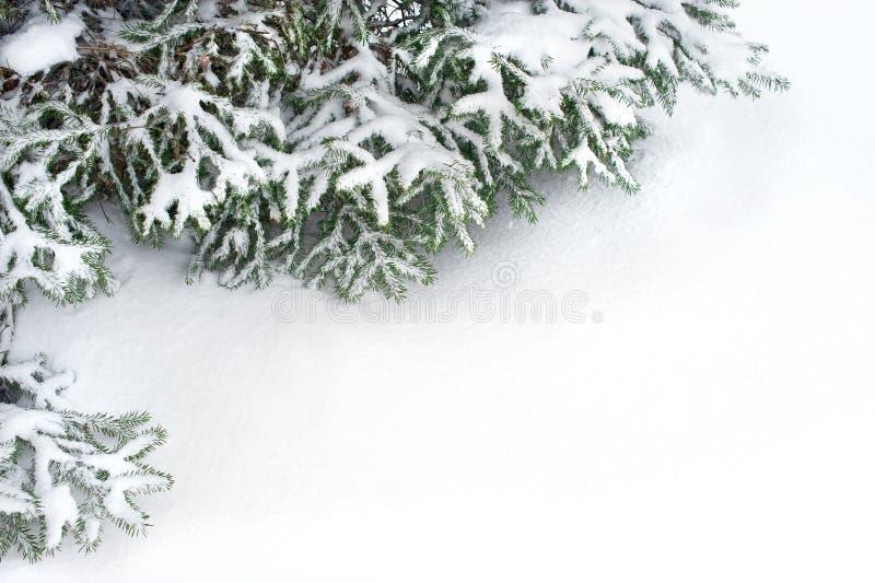 Filiali di albero dell'abete della neve nell'ambito delle precipitazioni nevose immagini stock