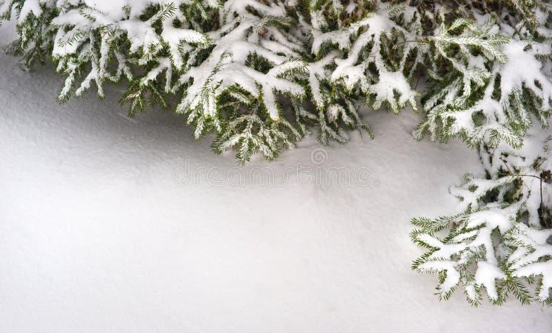 Filiali di albero dell'abete della neve nell'ambito delle precipitazioni nevose Struttura per testo immagine stock