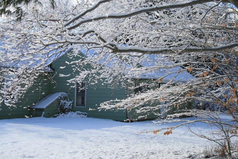 Filiali di inverno immagini stock libere da diritti