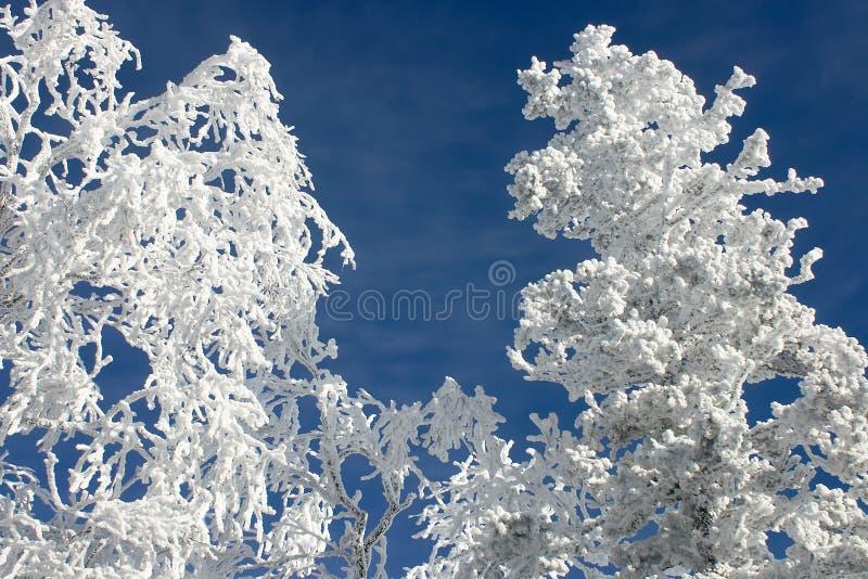 Rami di inverno con neve #5 immagini stock