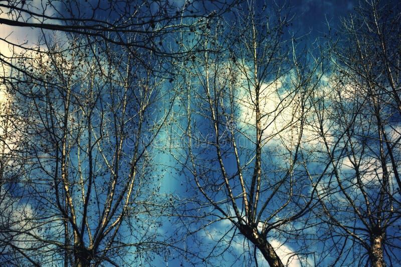 Filiali nude di un albero contro il cielo blu scuro fotografia stock
