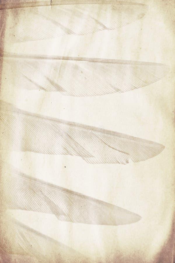 Filigrana de la pluma foto de archivo