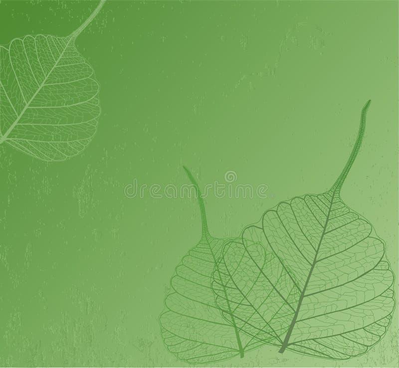 Filigree leaves, vector. Filigree leaves with green background stock illustration