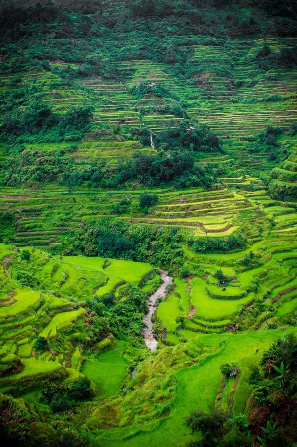 Filipińscy Rice tarasy zdjęcie royalty free