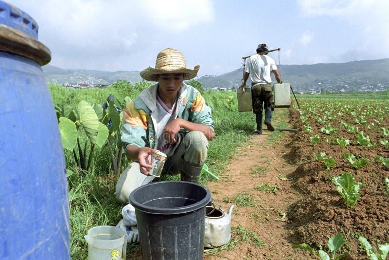 Filipijnse jongen en irrigatie jonge plantaardige installaties royalty-vrije stock fotografie
