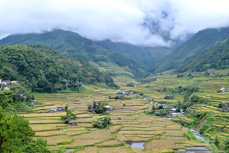 Filipinas, terraços do arroz no vale Hapao imagem de stock royalty free