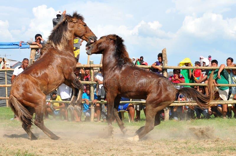 Filippijnen, Mindanao, Paardstrijd stock foto's