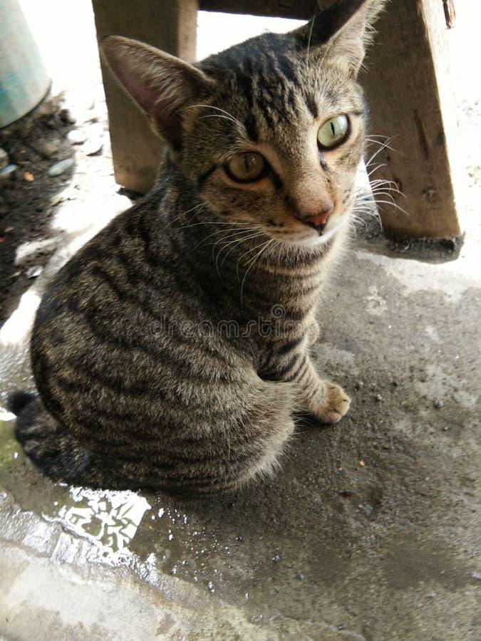 Filippijnse kat stock foto's