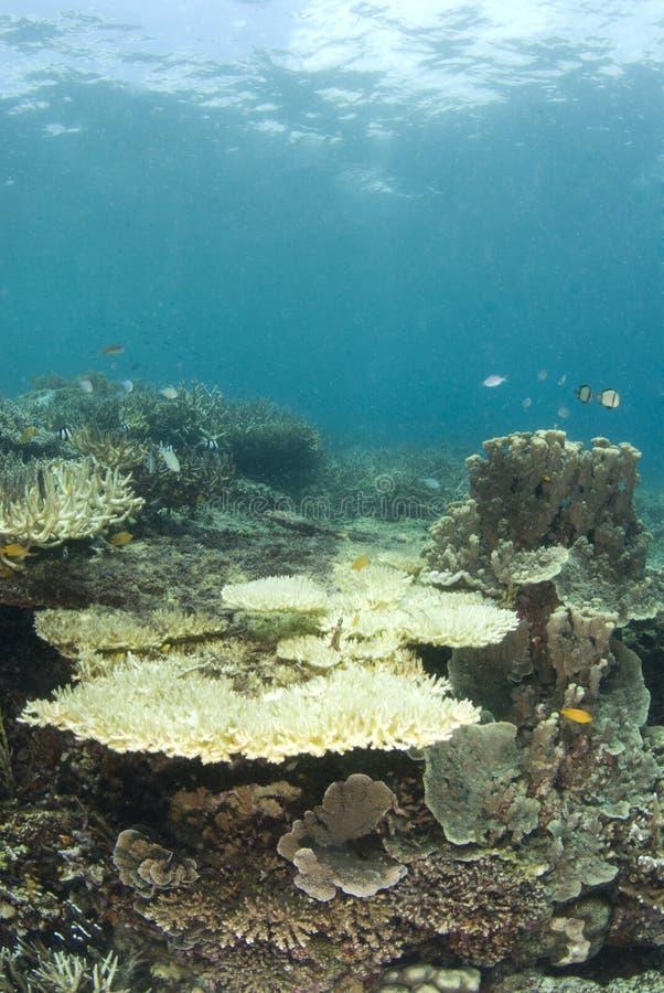 Filippine di corallo guasti fotografia stock libera da diritti
