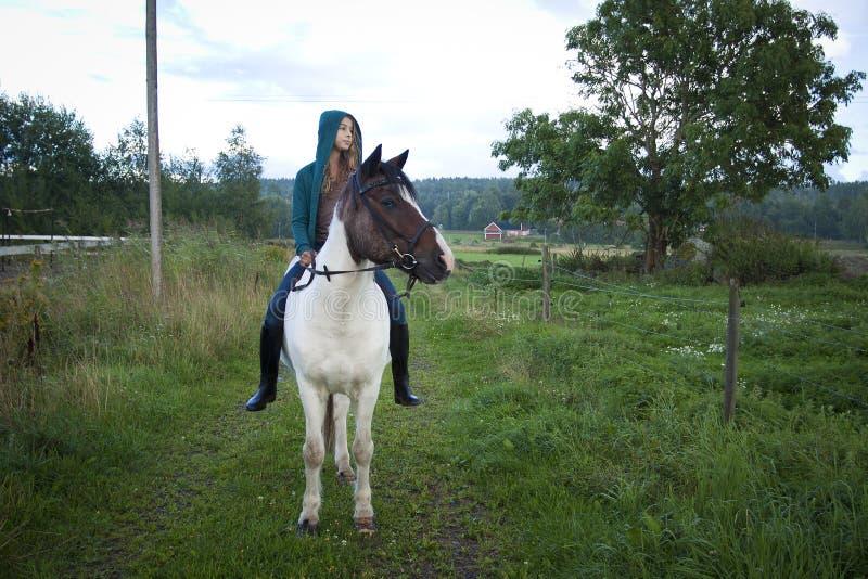 Fille à cru sur le cheval islandais image stock