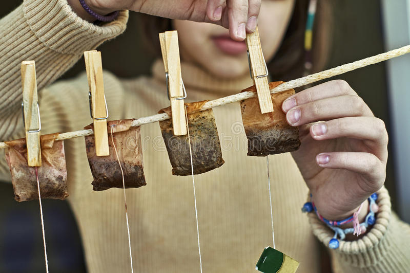 Fille accrochant les sacs à thé utilisés pour le deuxième usage image libre de droits