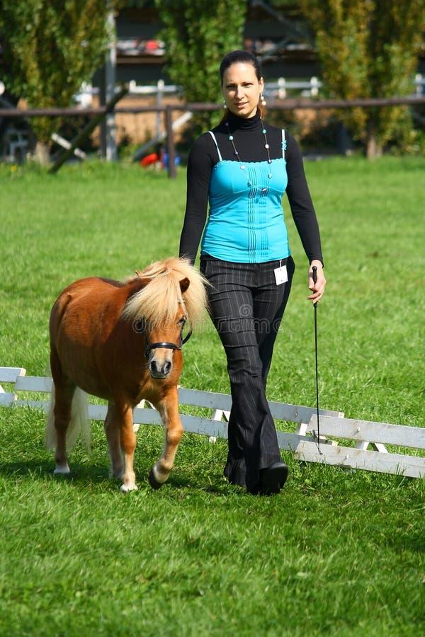 Fille affichant un mini poney photographie stock