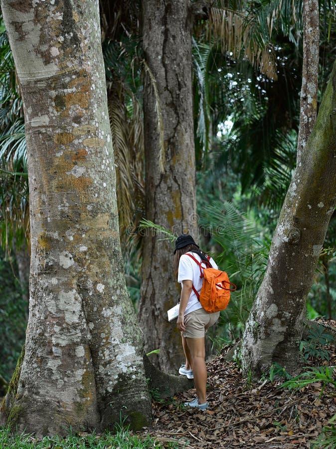 Fille asiatique de botaniste apprenant l'activit? en plein air d'aventure avec le mode de vie dans la for?t tropicale image libre de droits