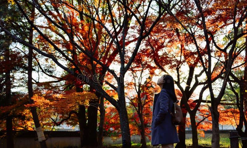 Fille asiatique marchant dans le jardin d'érable japonais, Kyoto, Japon photo stock