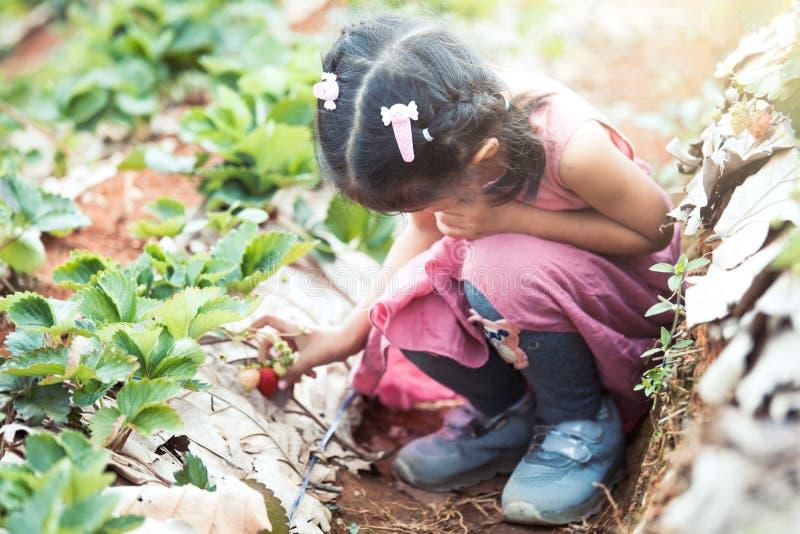 Fille asiatique mignonne de petit enfant sélectionnant les fraises fraîches photographie stock libre de droits