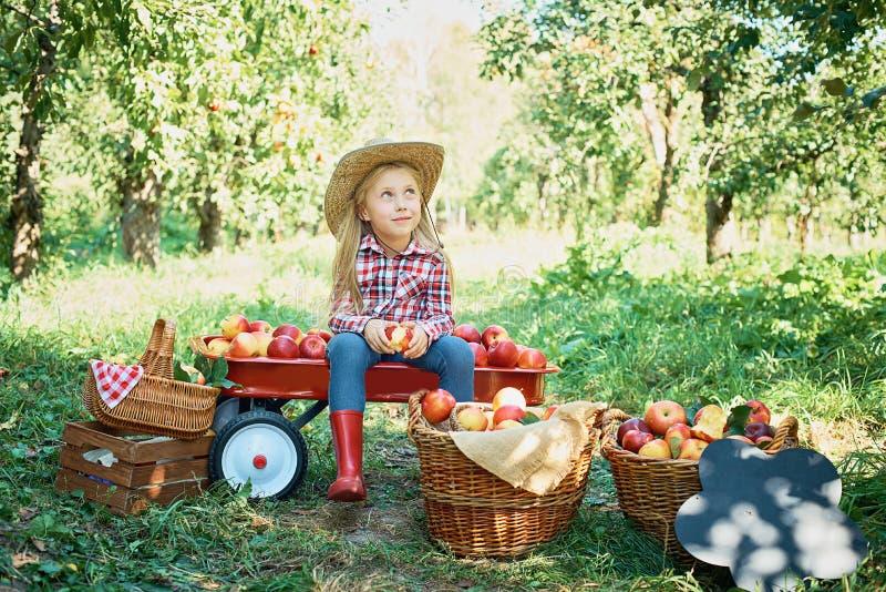 Fille avec Apple dans le champ de pommiers Belle fille mangeant Apple organique dans le verger Concept de moisson Jardin, consomm photos stock