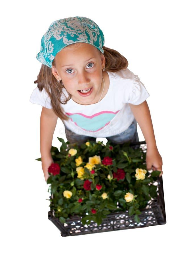 Fille avec des roses sur un fond blanc image stock