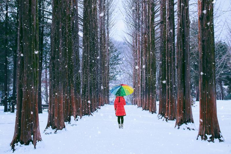 Fille avec le parapluie coloré dans l'arbre de rangée, île de Nami en Corée du Sud Hiver en Corée du Sud images stock