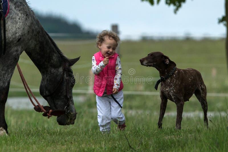 Fille ayant l'amusement avec le chien et le cheval dans les bois, jeune jolie fille avec les cheveux bouclés blonds, liberté, joi image stock
