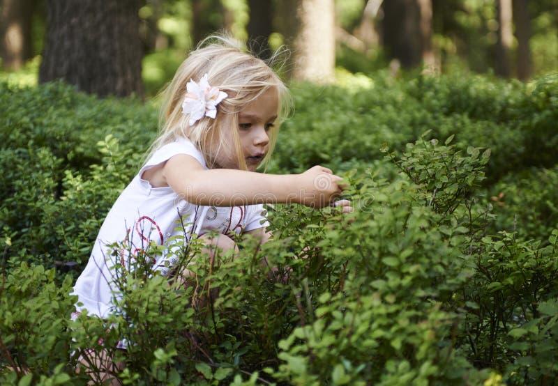Fille blonde d'enfant petite sélectionnant les baies fraîches sur le gisement de myrtille dans la forêt photos libres de droits