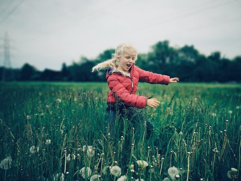 Fille caucasienne marchant parmi les pissenlits et l'herbe sur le pré à la soirée photos stock