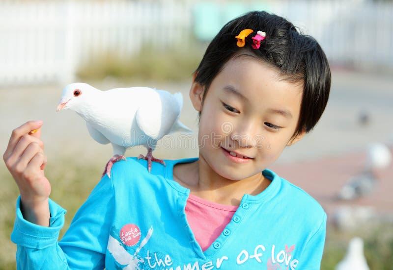 Fille chinoise avec le pigeon photos libres de droits