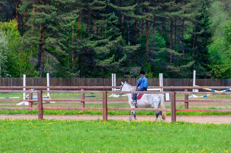 Fille conduisant un cheval Dans les mains de tenir le téléphone photographie stock libre de droits