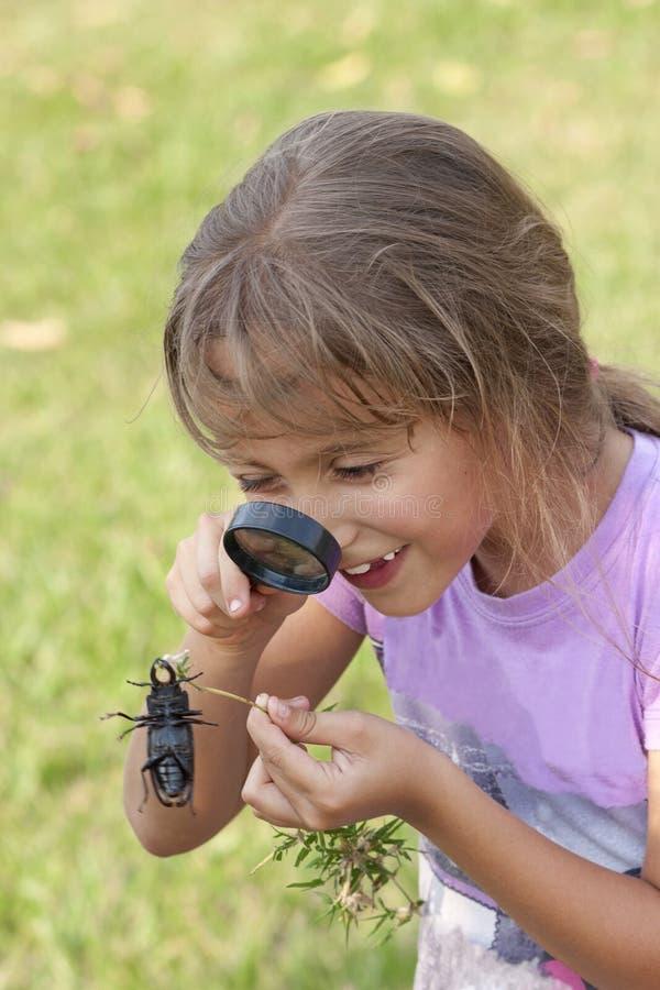 Fille curieuse regardant le coléoptère photo libre de droits