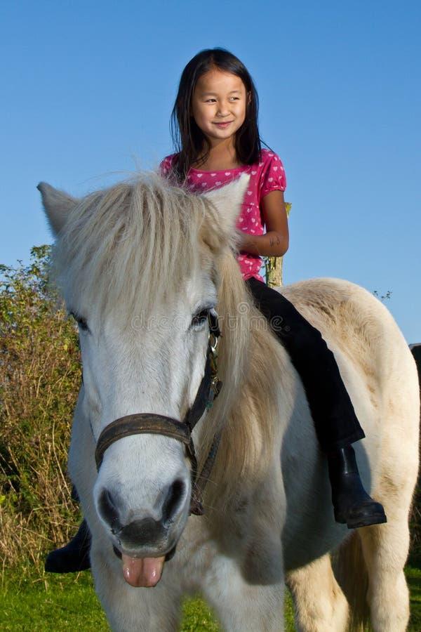 Fille débarrassant un cheval blanc au Danemark images libres de droits