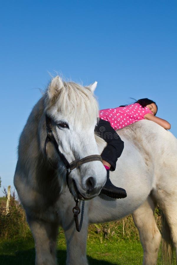 Fille débarrassant un cheval blanc au Danemark photographie stock