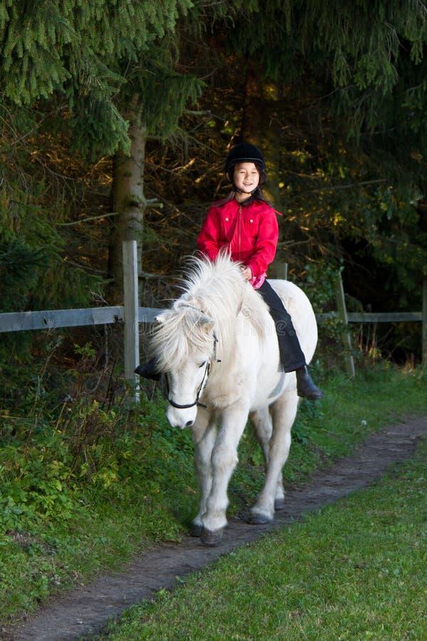 Fille débarrassant un cheval blanc au Danemark photos stock