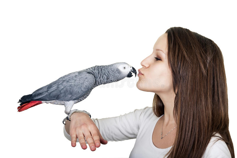 Fille d'ANG de perroquet de gris africain jeune image stock