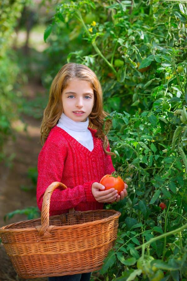 Fille d'enfant d'agriculteur moissonnant des tomates photo stock