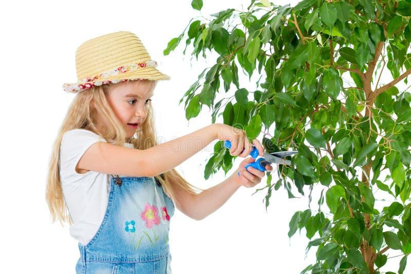 Fille d'enfant de jardinier s'inquiétant à l'arbre photographie stock