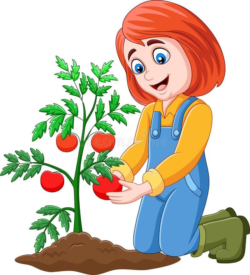 Fille de bande dessinée moissonnant des tomates illustration libre de droits