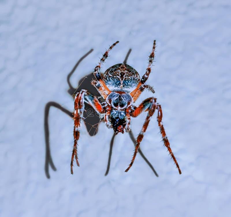 Fille de danse sur l'araignée colorée photos libres de droits