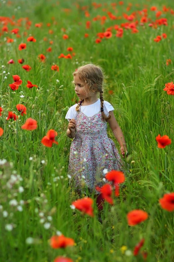 Fille an de l'enfant en bas âge trois dans le domaine d'été des pavots de floraison images libres de droits