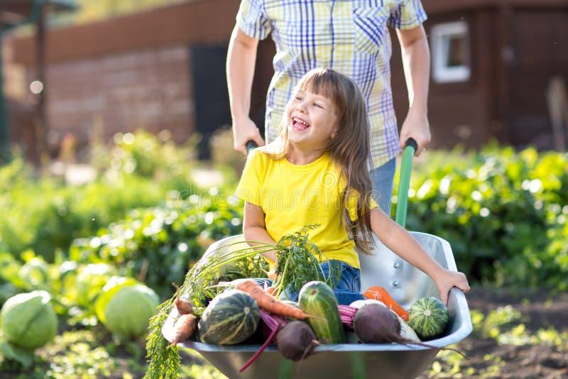 Fille de petit enfant à l'intérieur de brouette avec des légumes dans le jardin images stock