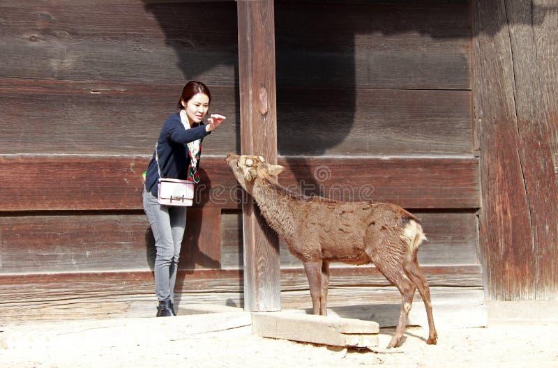 Fille de touristes agissant à alimenter la nourriture pour des cerfs communs sur le bâtiment en bois de fond devant le temple de  images stock