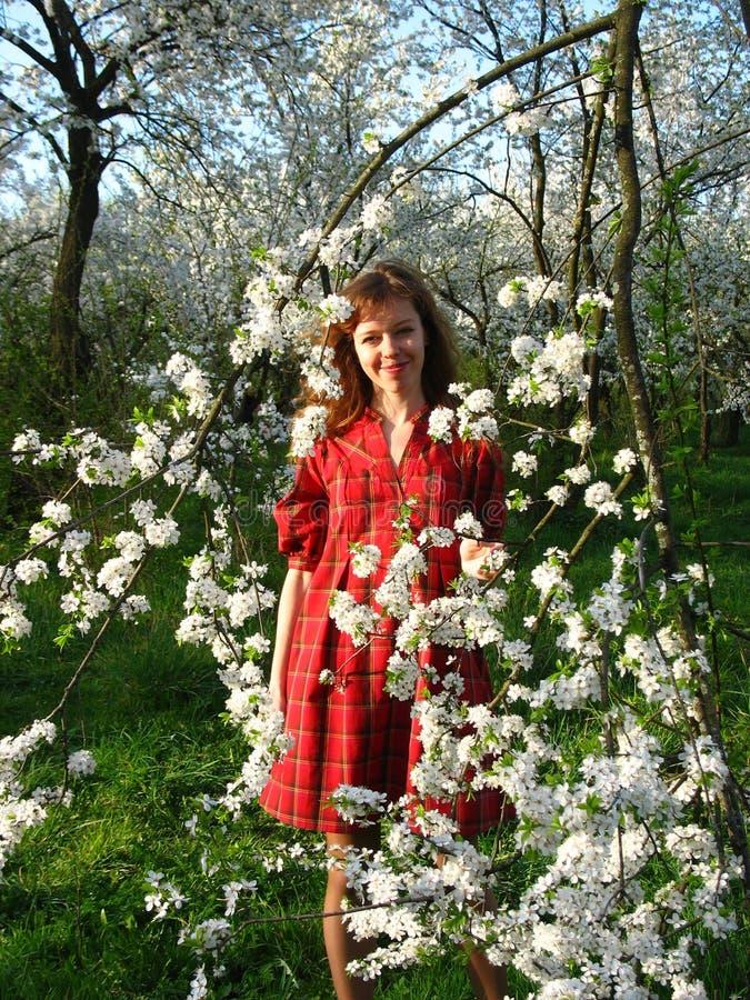 Fille et cerisier photographie stock