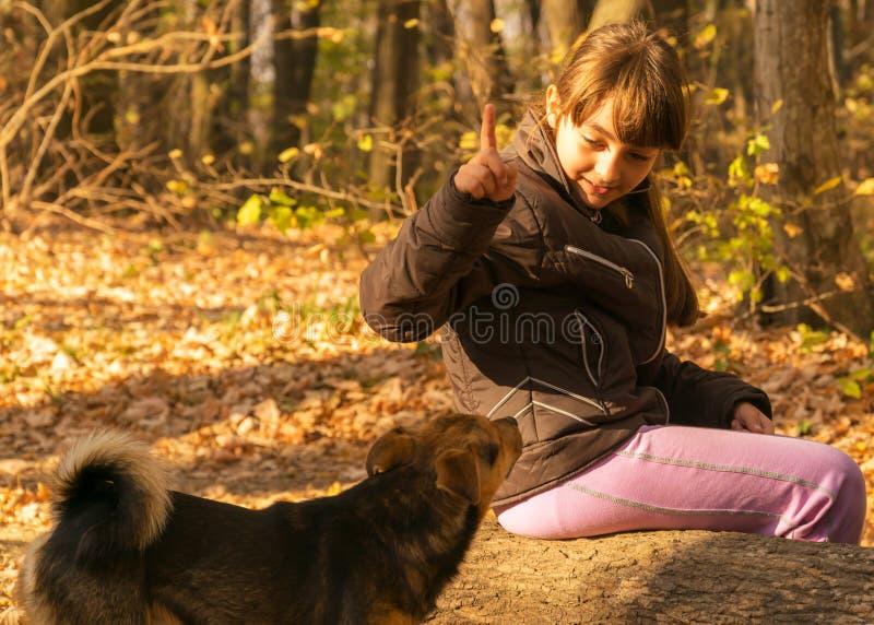 Fille et chien dans la forêt d'automne photos stock