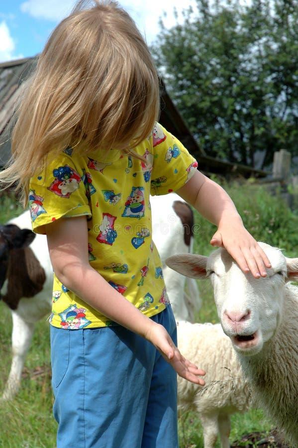 Fille et moutons image libre de droits