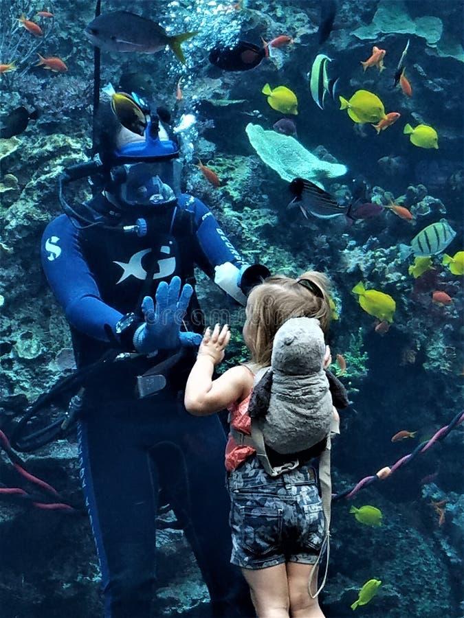 Fille et plongeur High Five photos libres de droits